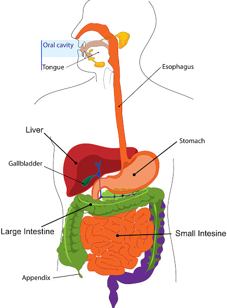 Aharapaka-The Digestive Process
