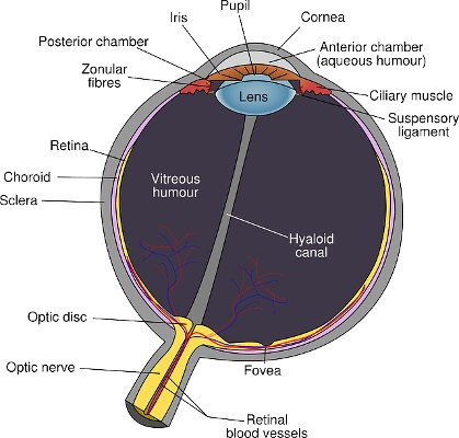 Human Eye - Spectacles-Cataract