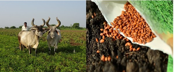 Ploughing-Sowing-Vedic Agriculture Process